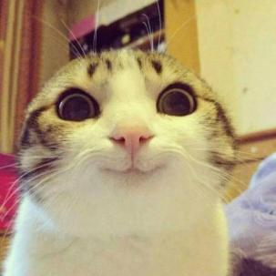Smiling-Cat